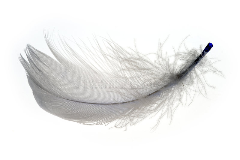 Feather 1 stock photography