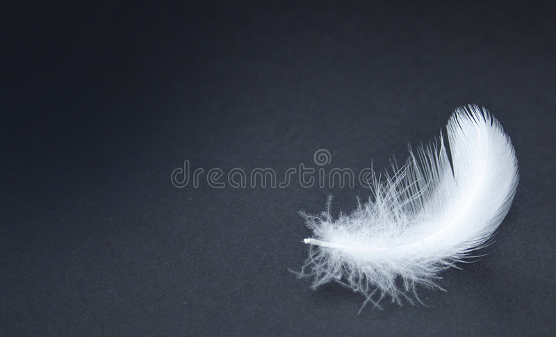 Feather. On a black background