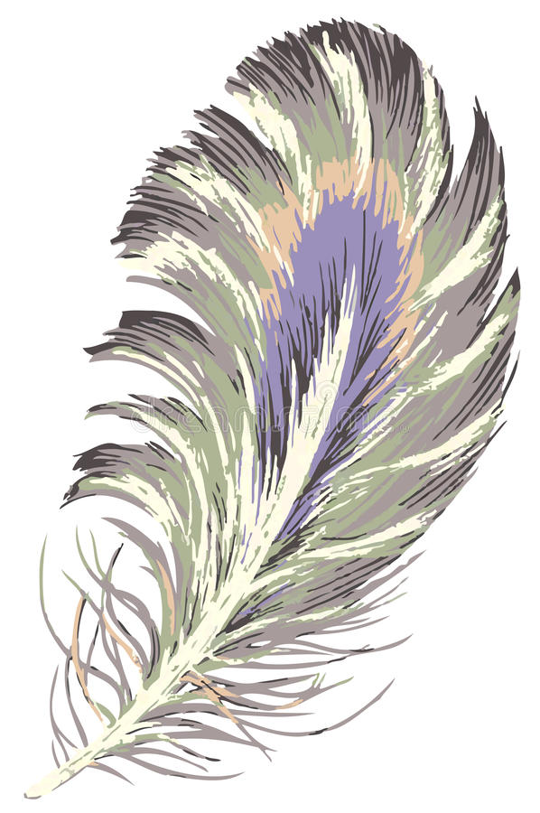 Download Feather stock illustration. Image of gravity, colorful - 12768292