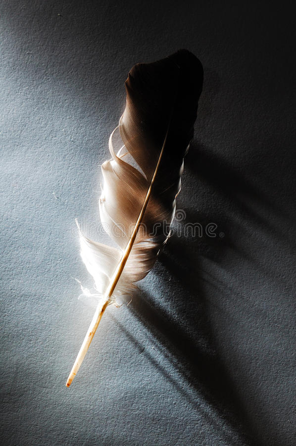 Download Feather stock photo. Image of light, life, plumage, shadow - 16265786
