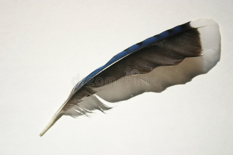 Download Feather stock image. Image of black, shadow, natural, blue - 16685