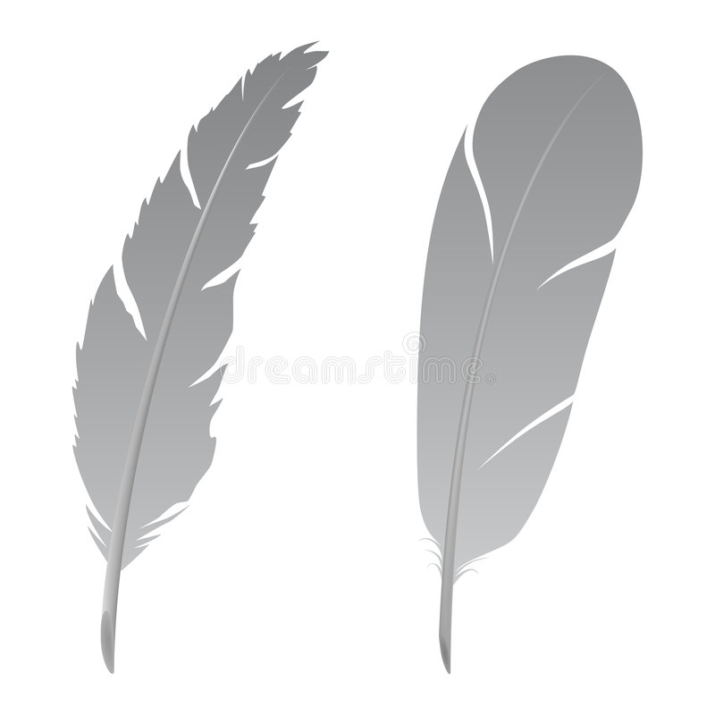 Feather vector illustration