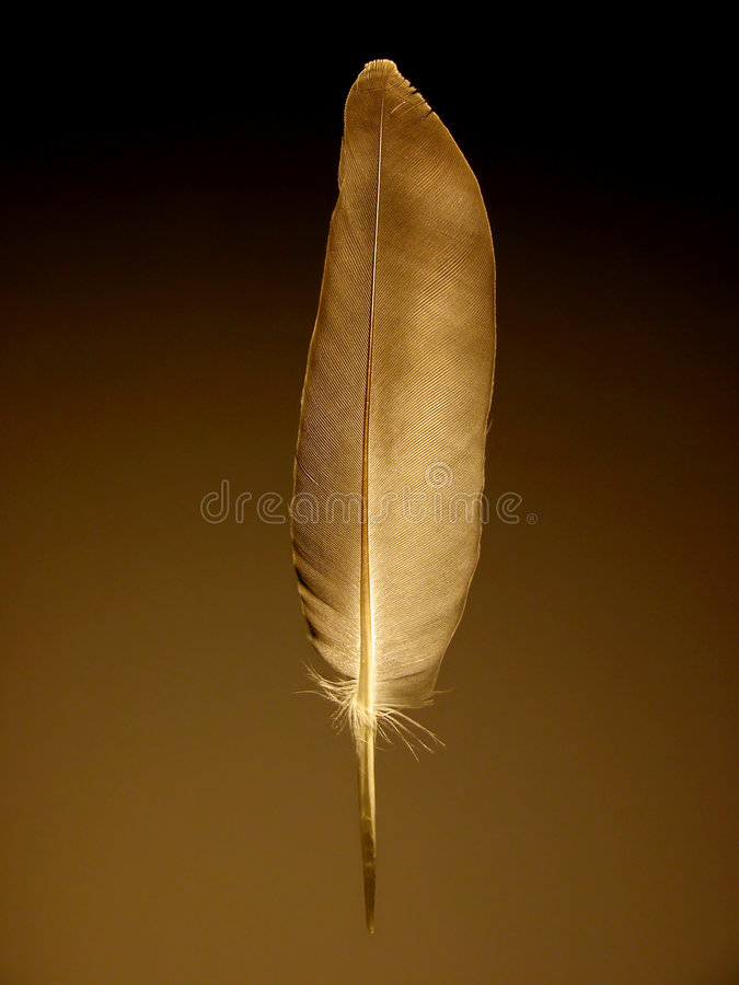 Feather. Single feather with brown background