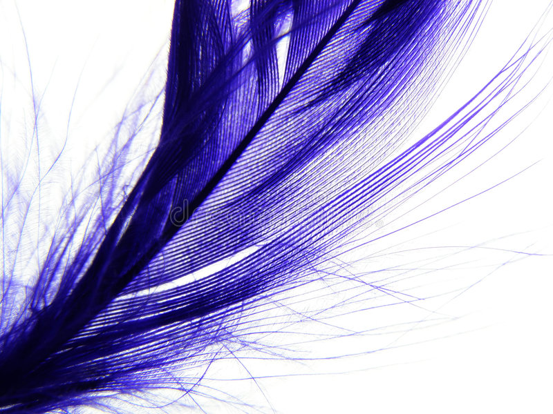 Download Feather stock image. Image of fragile, soft, violet, abstract - 2996779