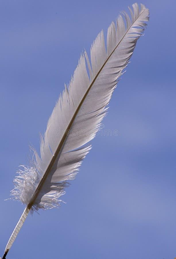 Feather stock photos