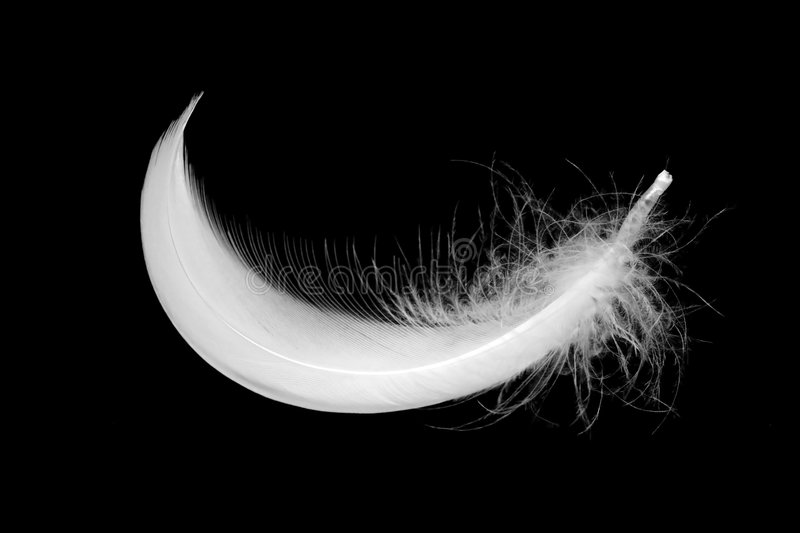Download Feather stock image. Image of feather, organic, detail - 6827421