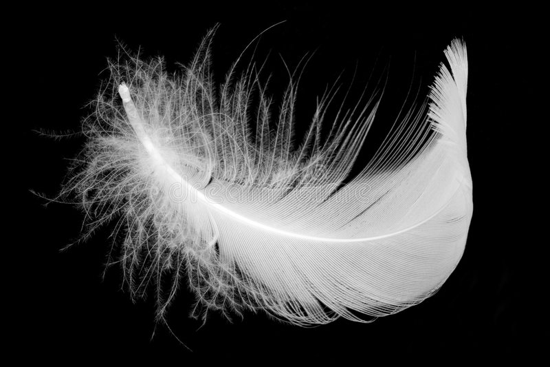 Download Feather stock photo. Image of drawing, grace, flock, black - 6827436