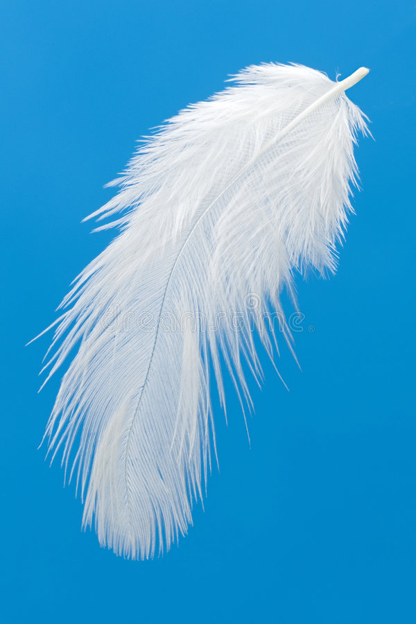 Free Feather Royalty Free Stock Photos - 687988