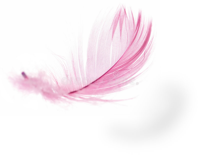 Feather. Pink Feather in soft-focus view. Close-Up. With white background - Isolated royalty free stock images