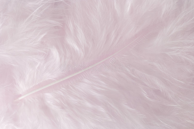 Download Feather stock photo. Image of background, feathers, texture - 8749886