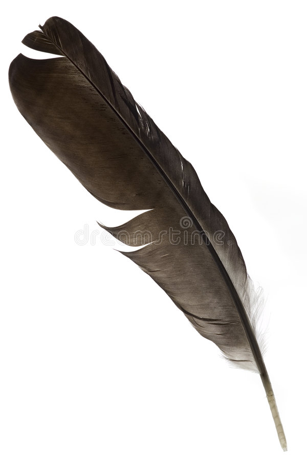 Free Feather Royalty Free Stock Image - 931466