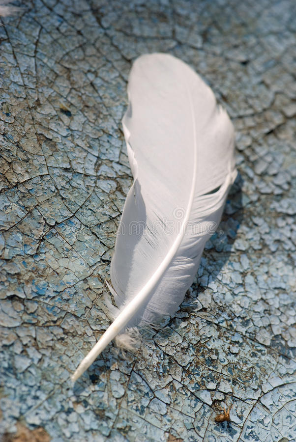 Feather alone stock image