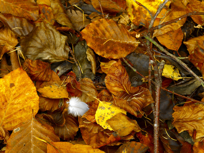 Feather on autumn forest floor royalty free stock photo
