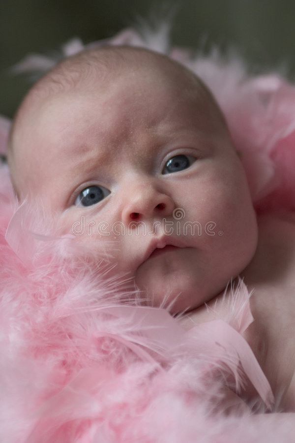 Feather baby royalty free stock photo
