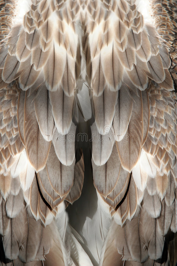 Feather background royalty free stock photo
