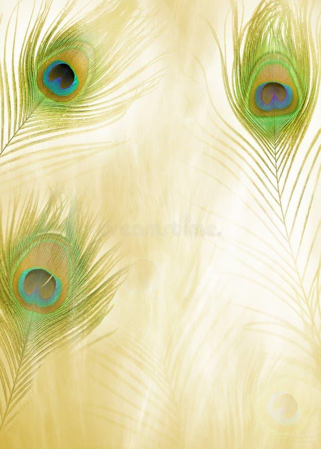 Feather Background stock photos