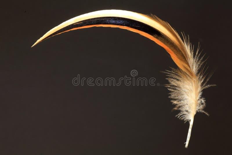 Feather of Baikal Teal stock image