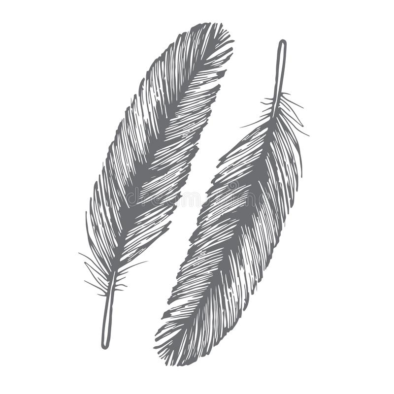 Free Feather Bird Drawing рattern аeathers Set Stock Images - 121162404