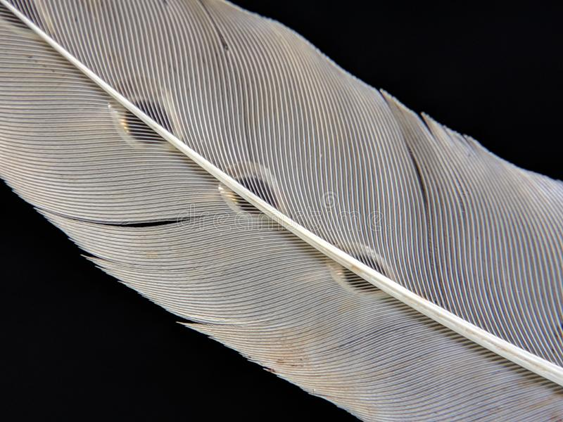 Feather of a bird in droplets of water on a dark background stock images
