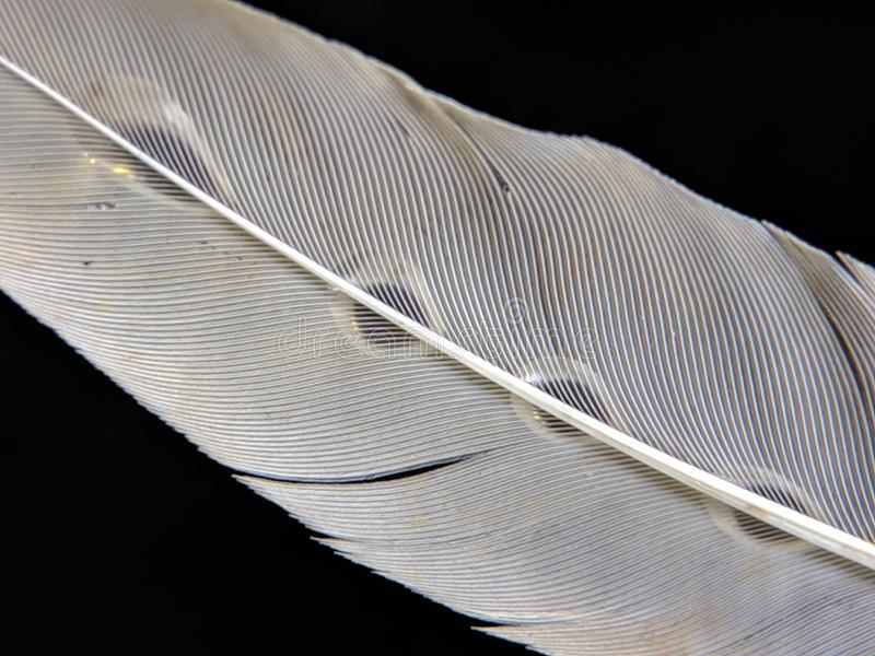 Feather of a bird in droplets of water on a dark background royalty free stock images