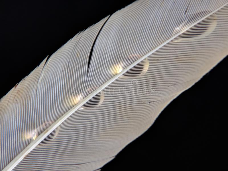 Feather of a bird in droplets of water on a dark background stock photography