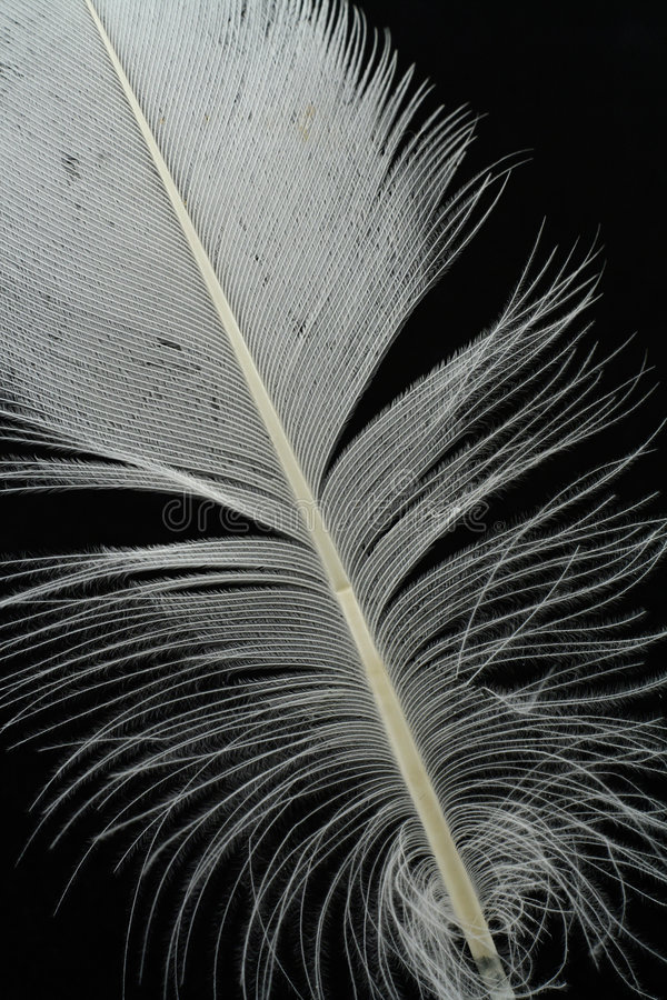 Feather On Black Stock Photography