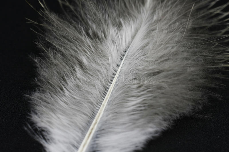 Feather. On a black background royalty free stock image
