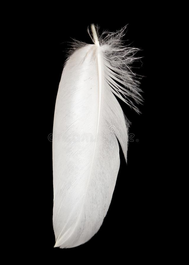 Feather on a black background stock photography