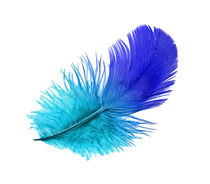 Feather of the blue bird. Steaming midair