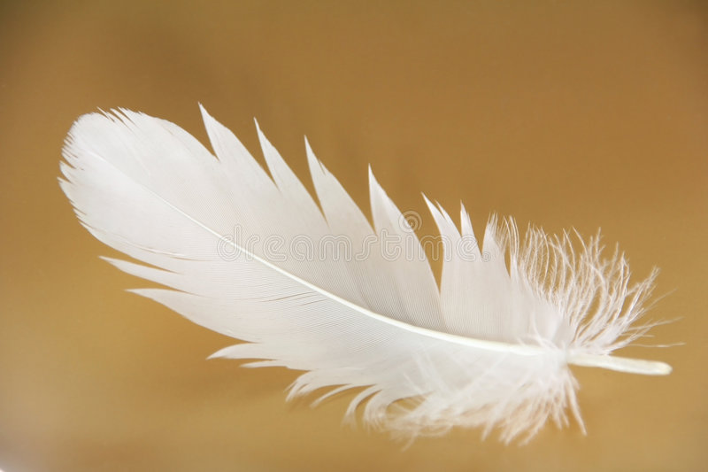 Feather close-up. Small feather close-up on a gold background stock photos