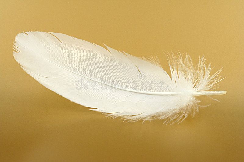 Feather close-up. Small feather close-up on a gold background stock image