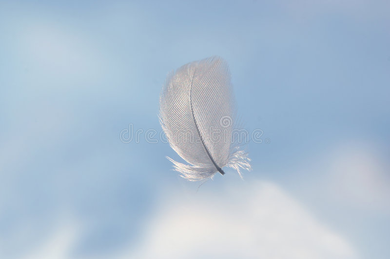 Feather in clouds stock images