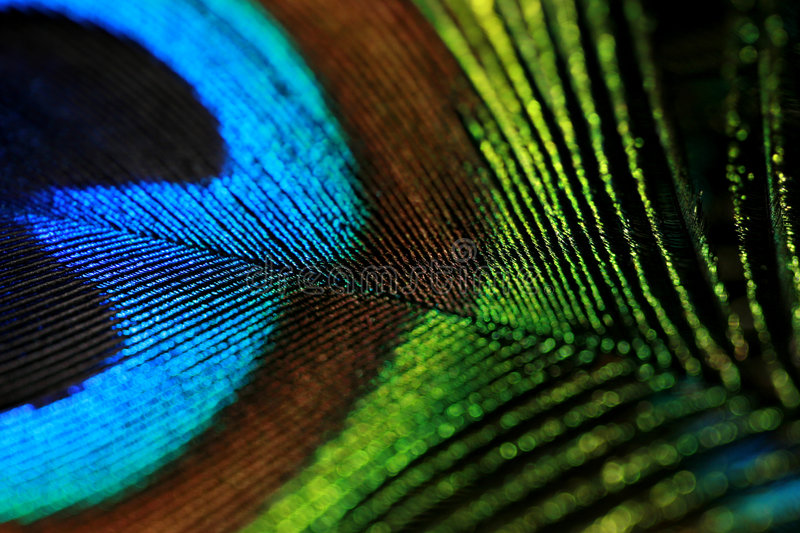 Feather colors stock images