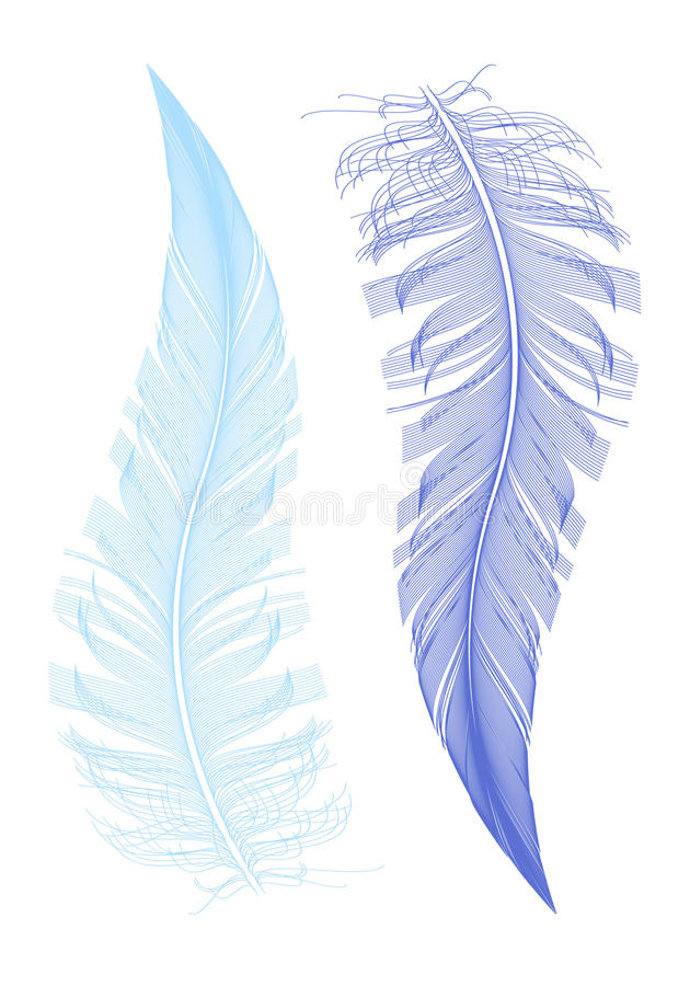 Feather drawing, vector royalty free illustration