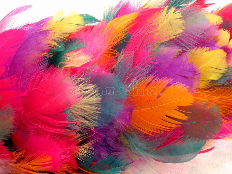 Feather Duster Abstract Royalty Free Stock Images