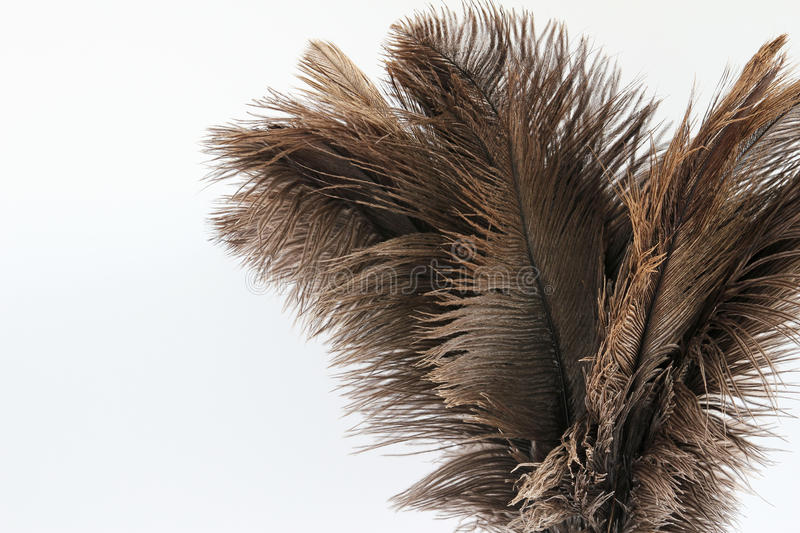 Feather duster close-up on a white background stock photo