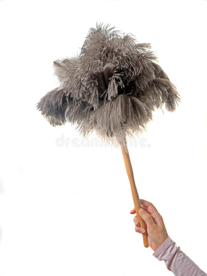 Feather duster. With female hand on white Background royalty free stock photo