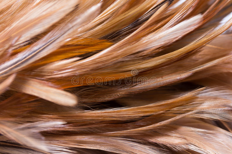 Feather duster. Isolated on white stock photo