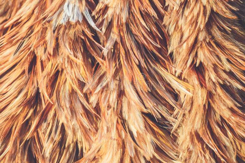 Feather duster texture use for background stock photos