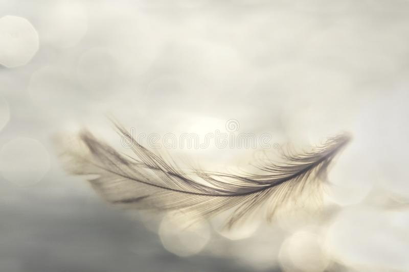 Feather flies gently into the sky, concept of lightness stock image