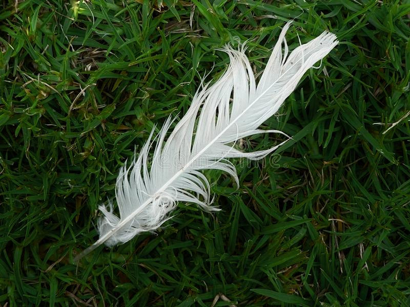 Feather In The Grass Free Stock Image