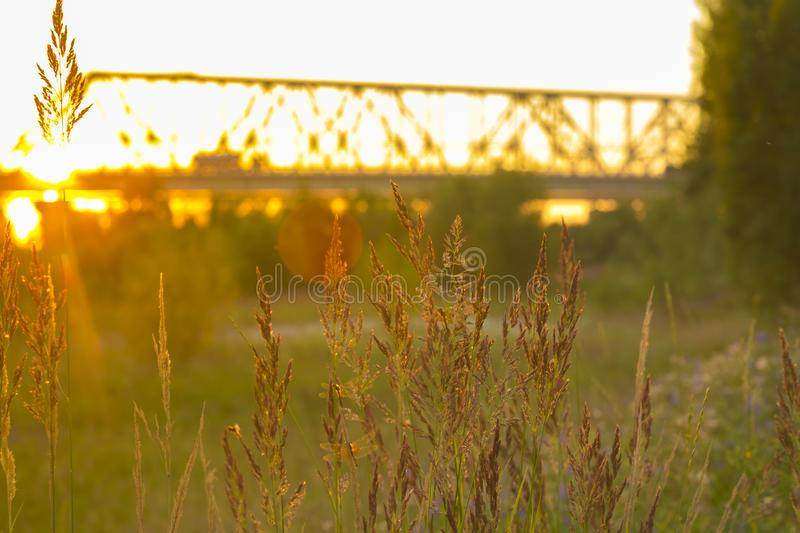 Feather-grass on the background of the automobile bridge. Plant feather grass close-up in the rays of the setting sun with a blurry grip plan stock photo
