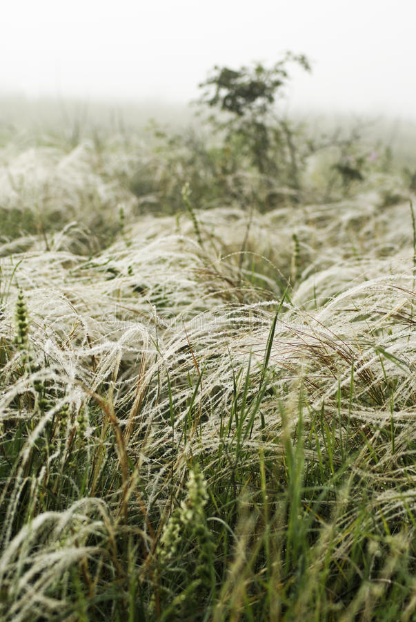 Download Feather grass in wind stock image. Image of haying, flora - 26198091