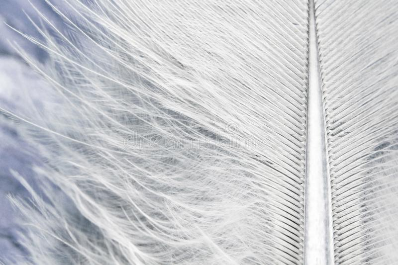 Feather macro background plumage stock photo