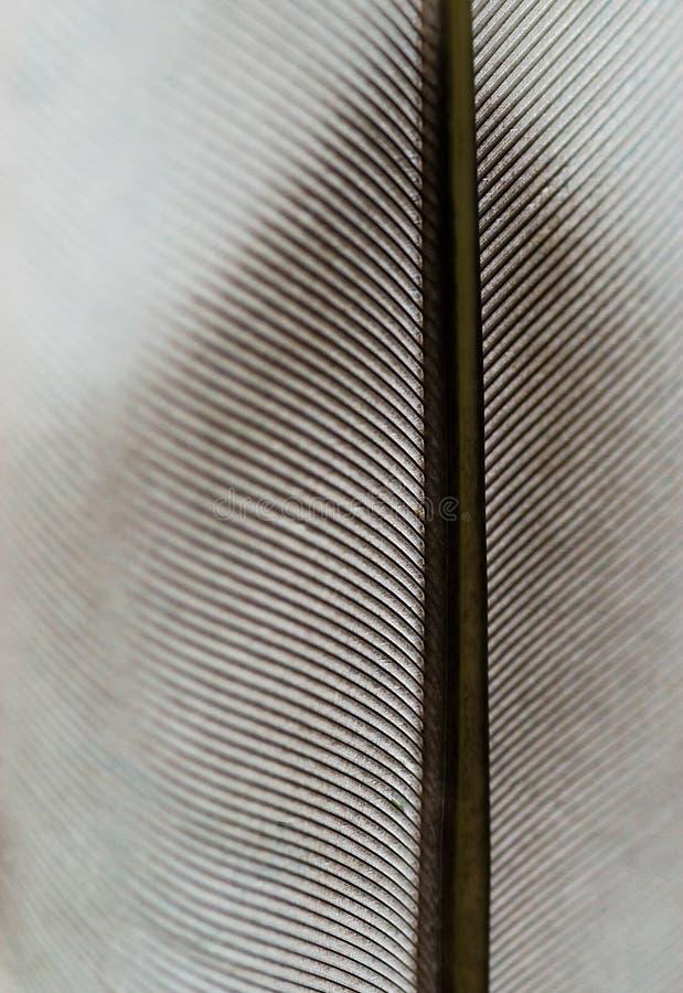 Feather macro texture stock photography