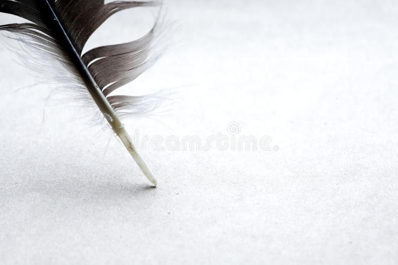 Feather On Paper stock photo