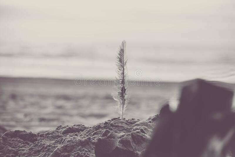 Feather on sandy beach stock photography