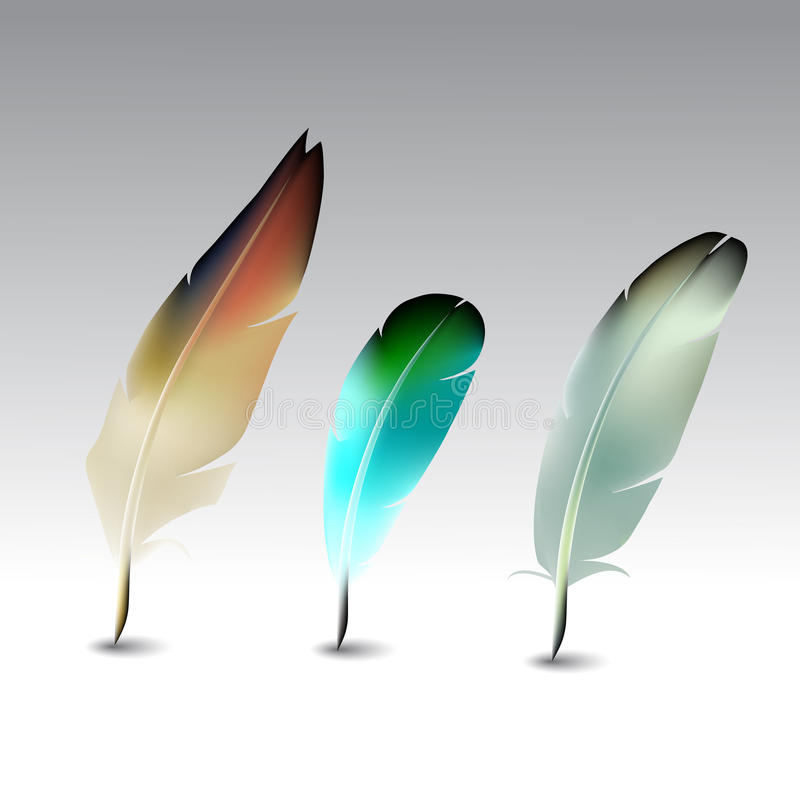 Feather set. Feather pen set, quill, calligraphy tool royalty free illustration