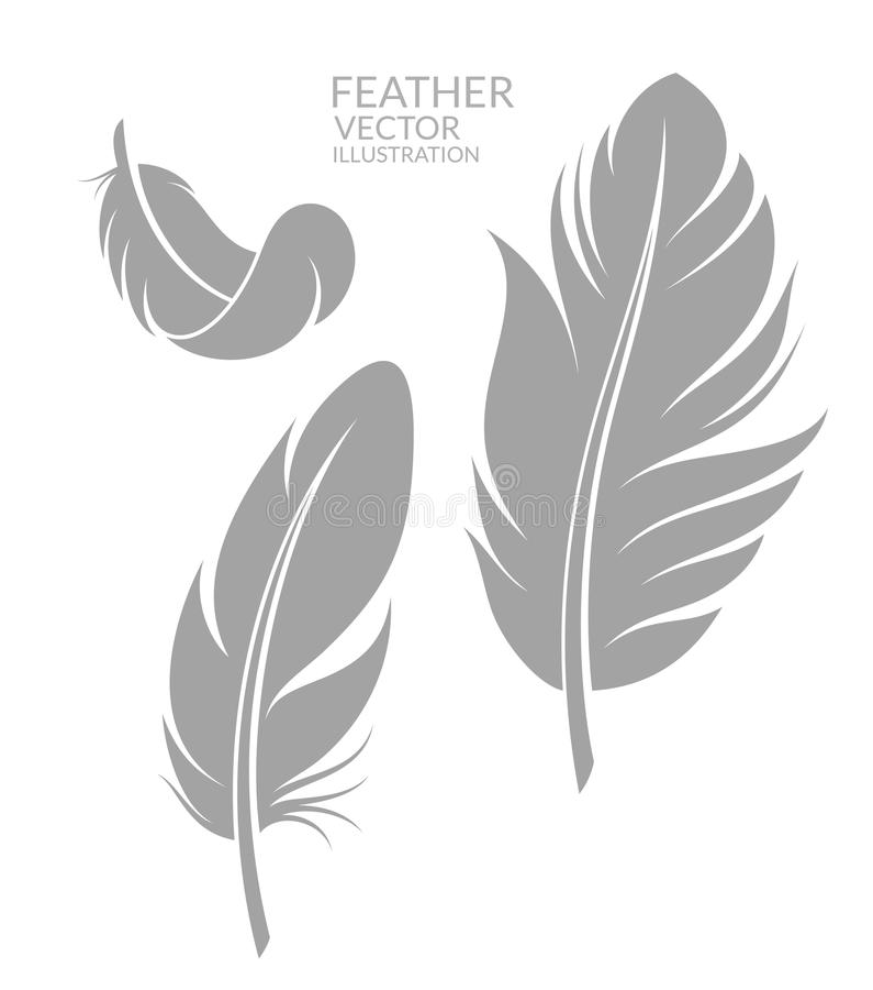 Feather. Set. Vector illustration EPS