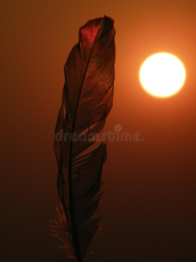 Feather on the sun set light. 